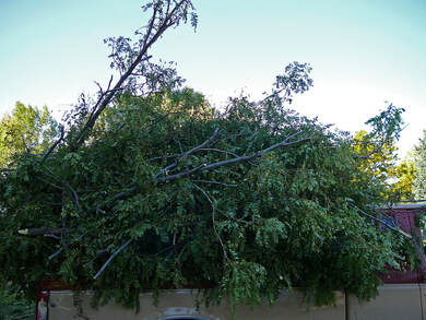 Tree Fell On Power Line Vacaville Tree Removal