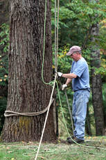 Tree Removal Setup Vacaville Tree Service